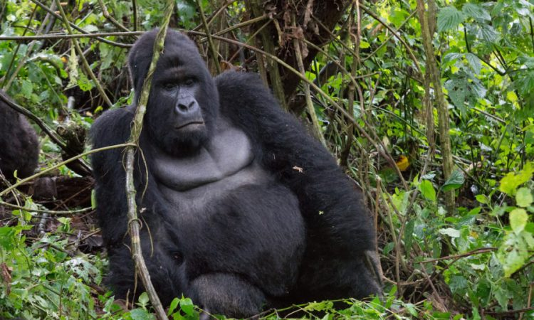 Best Gorilla Tracking Tips