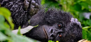 10 Interesting things about DRC Congo that you should know
