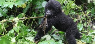 4 Days Gorillas and Nyiragongo