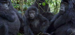 5 Days Virunga and Bwindi