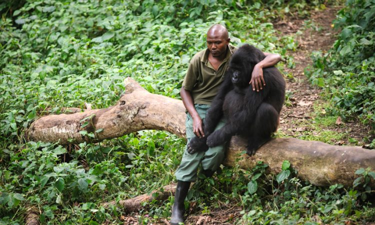 Is Virunga Safe