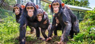 Lwiro Chimpanzee Sanctuary