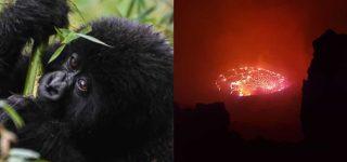 4 Days Virunga Gorilla Trekking & Nyiragongo Hiking Congo