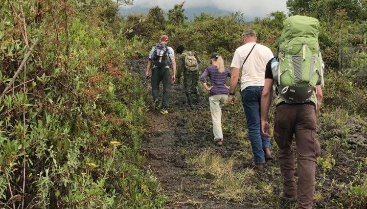Hiking Safaris