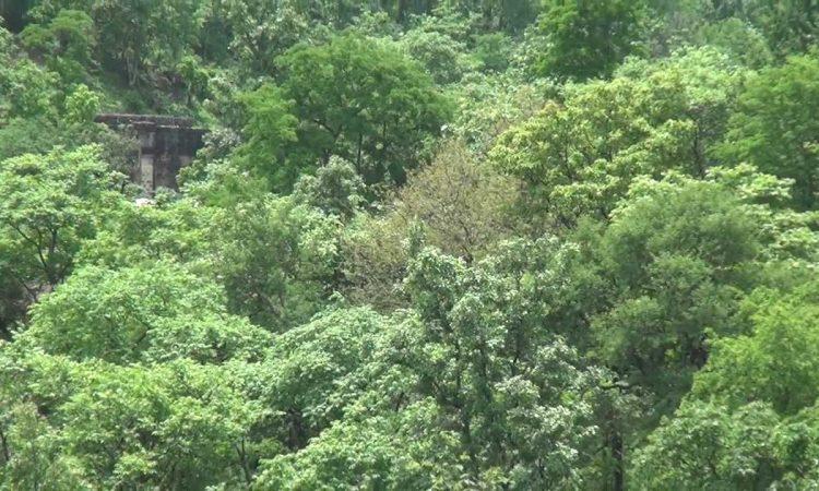 Mahura Forest