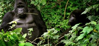 Requirements for accessing Virunga