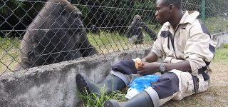Senkwekwe Gorilla Orphanage Center