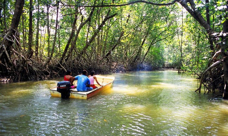 Mangroves National Park