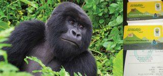 Bwindi Gorilla Trekking Permit