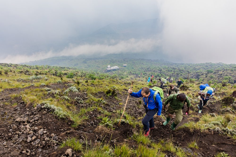 The Great Ape Package with Nyiragongo hike