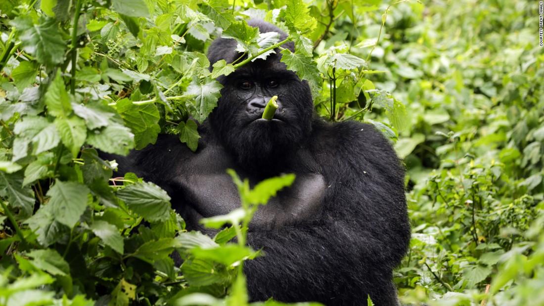 Virunga Gorilla Tours