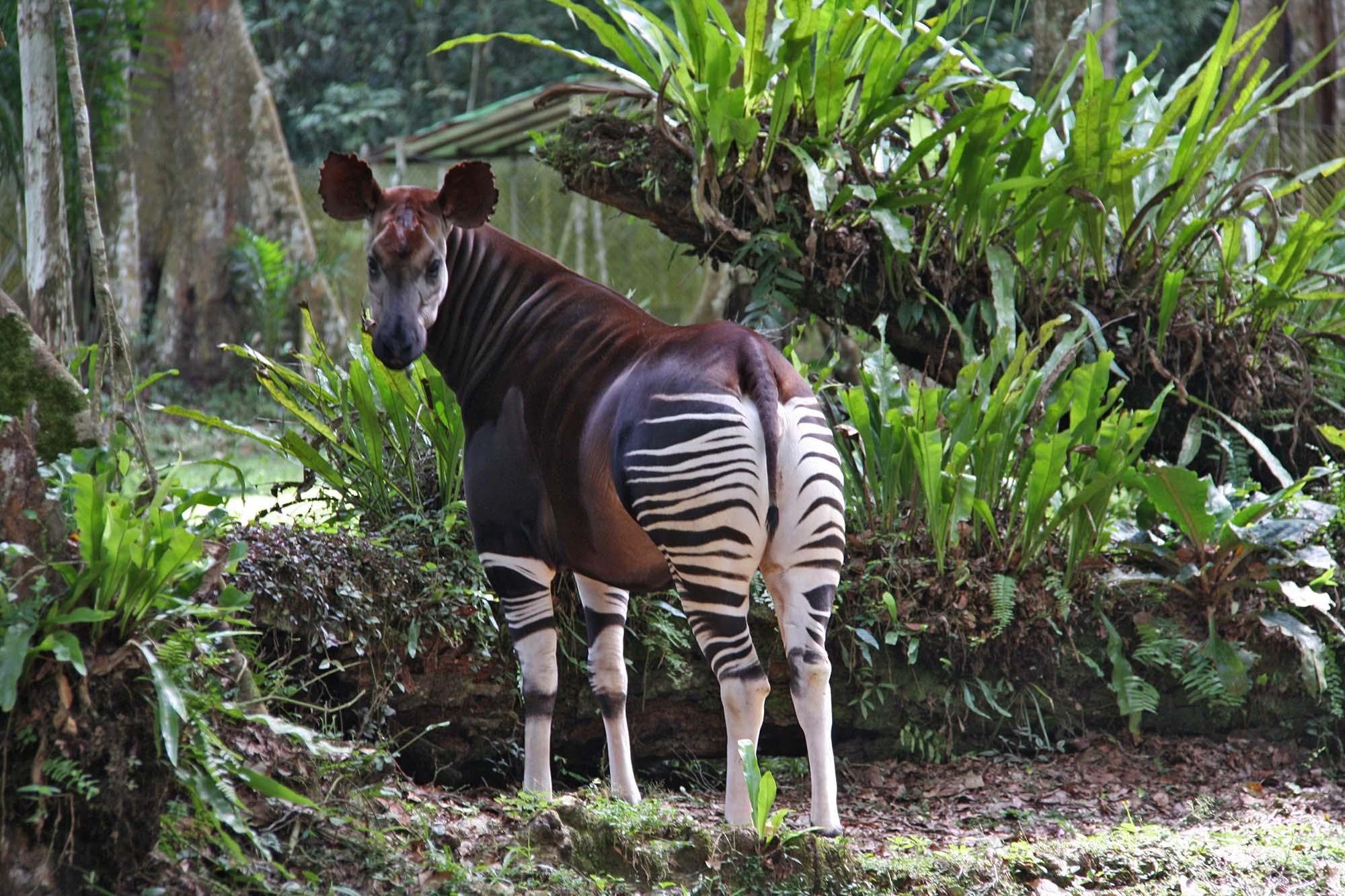 Okapi National Park