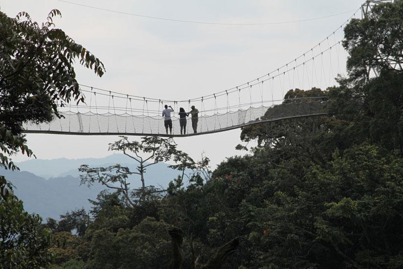 Canopy Walkway in Nyungwe Forest National Park Rwanda