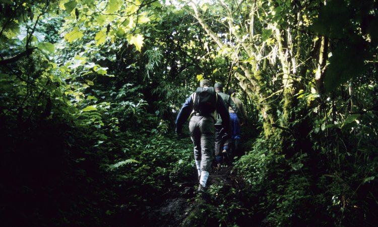 Entrance Fees for Virunga