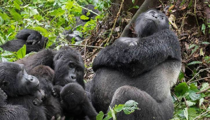 Getting to Virunga National Park