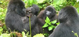 Virunga National Park Activities