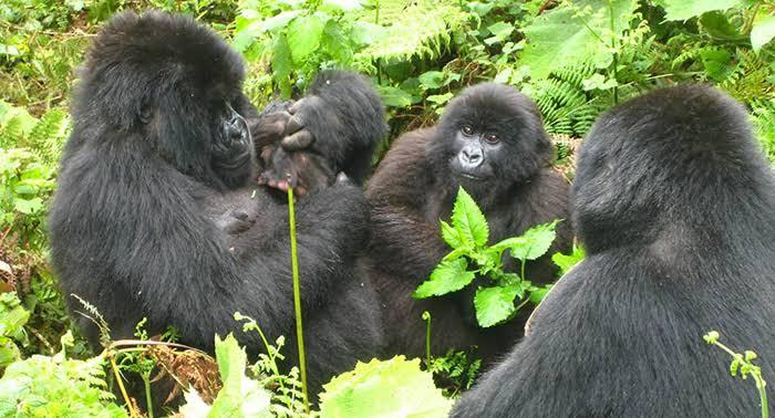 Virunga National Park Activities