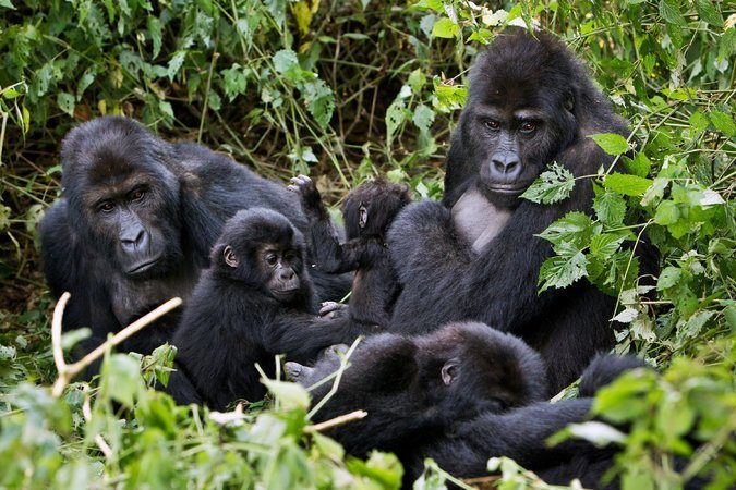 10 Days Congo Safari Tour