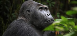 12 Days Kahuzi Biega & Virunga Classic Package