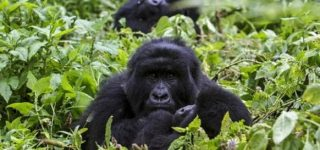 4 Days Uganda Gorilla & Wildlife Safari