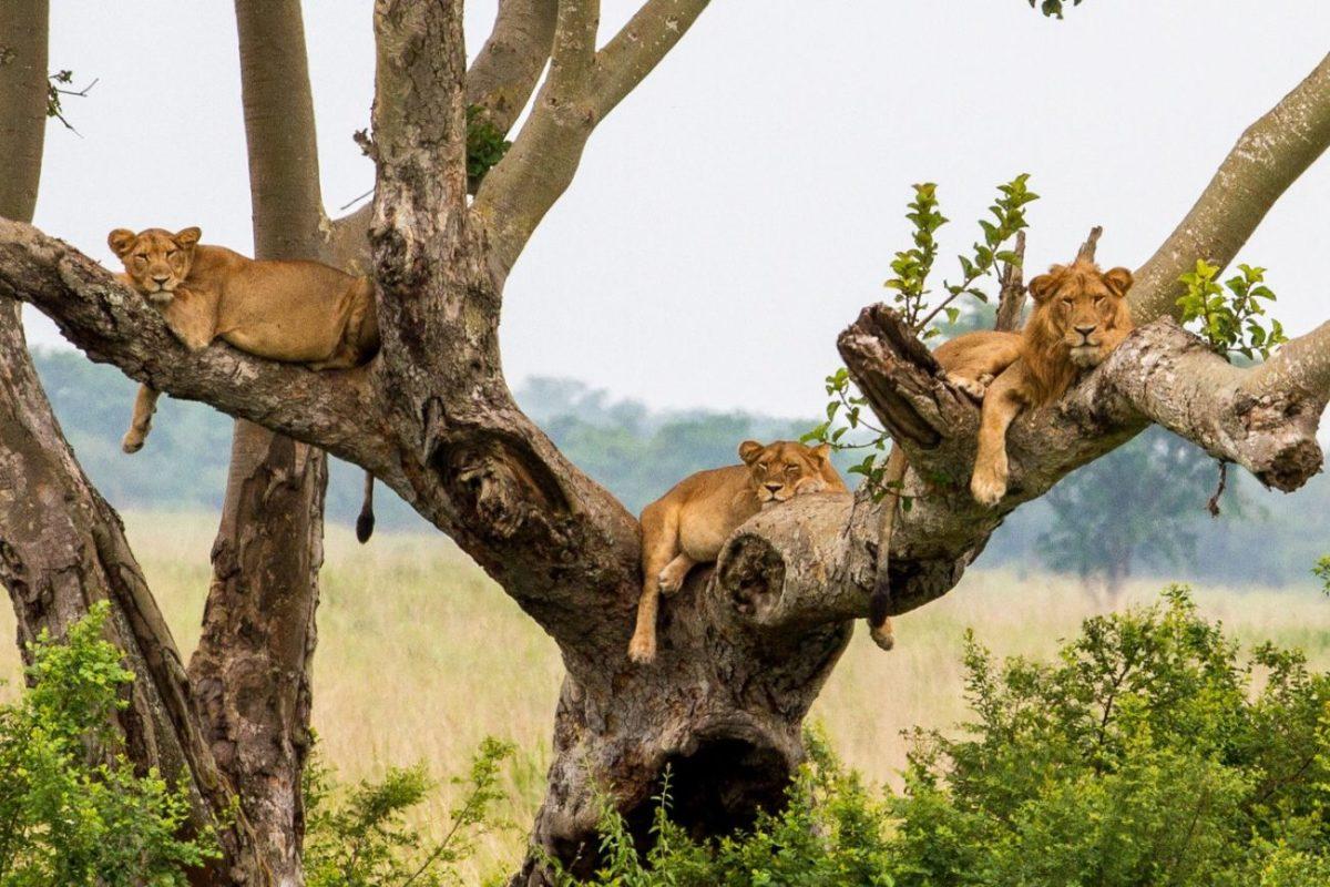 4 Days Uganda Gorilla & Wildlife Safari