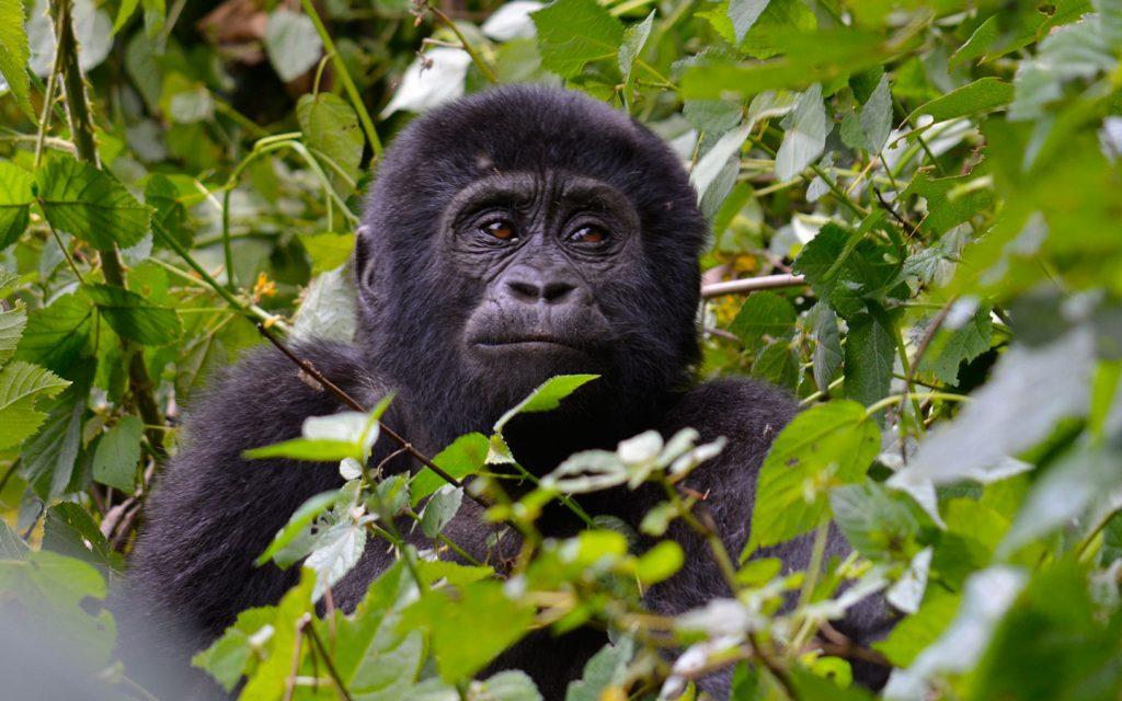 5 Days Uganda Wildlife & Gorilla Safari