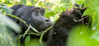 6 Days Uganda Gorilla, Chimpanzee & Wildlife Safari