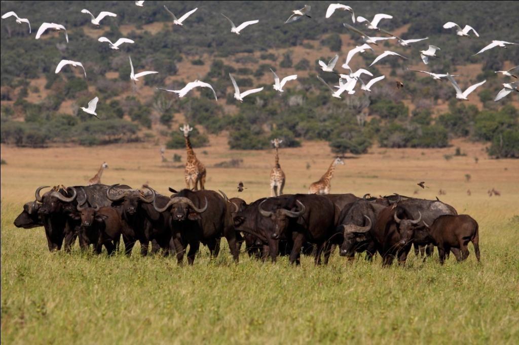 11 Days Rwanda and Congo Safari