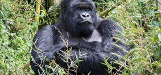 Best time Virunga National Park