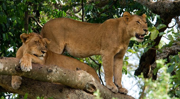 6 Days Uganda Gorilla & Wildlife Safari