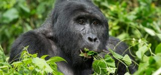 6 Days Uganda Gorilla & Wildlife Safari