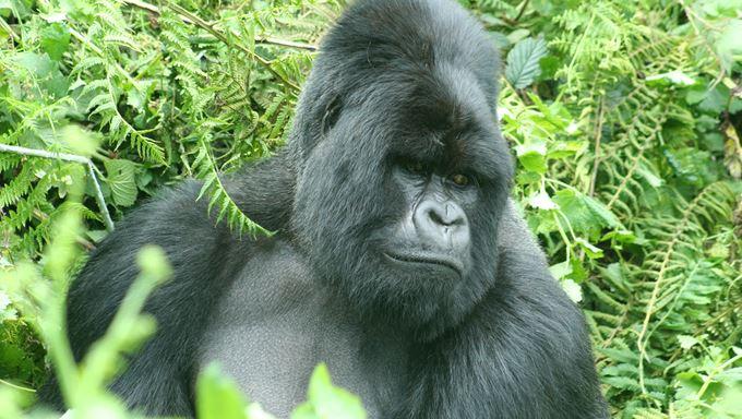 Why tourists visit Virunga National Park