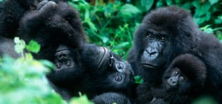 5 Days Virunga Gorilla & Akagera Wildlife Tour