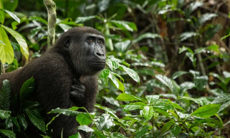 7 Days Kahuzi Biega and Virunga National Park
