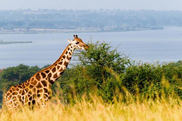 3 Days Murchison Falls National Park tour