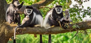 5 Days Akagera Wildlife and Nyungwe Primates