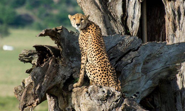 5 Days Kidepo & Murchison Falls Flying Safari