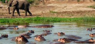 5 Days Uganda Wildlife & Gorilla Trekking Safari