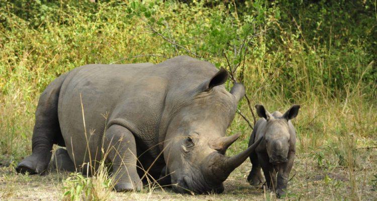 7 Days Murchison Falls & Kidepo Wildlife Safari
