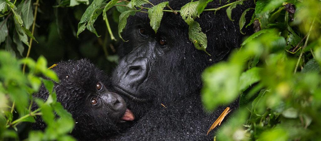 Sectors of Virunga National Park