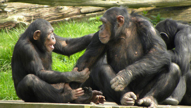 4 Days Kahuzi Biega Gorillas & Lwiro Chimpanzees