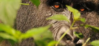 7 days Gorilla Bonanza package