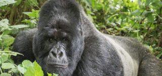 2 Days Gorilla Trekking Safari in Uganda