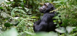 3 Days Kibale forest national park