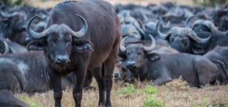 6 Days Bwindi, Queen Elizabeth, and Lake Mburo Wildlife Safari