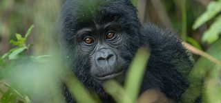 8 Days Virunga National Park special