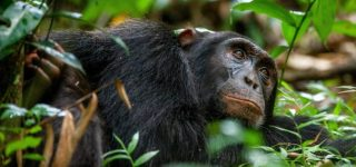 6 days Kibale forest, Queen Elizabeth and Lake Mburo Safari