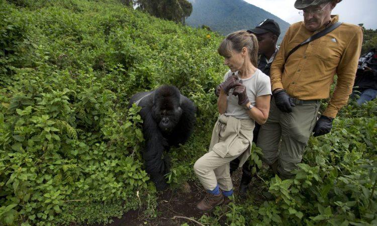Travel Guide for Gorilla Trekking in Virunga National Park