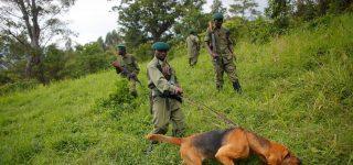 6 Virunga Rangers Killed in an ambush