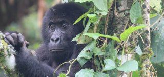 Virunga National Park Reopens for Tourism